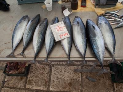 Fresh Catch in Split, Croatia